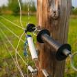 Электропастух: советы по выбору и установке