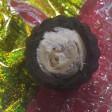 Конфеты с живыми червями в начинке попались жительнице Сергиева Посада