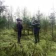 В Сергиевом Посаде зафиксирована незаконная вырубка елок