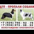 Хозяйка ищет собак. Помогите!
