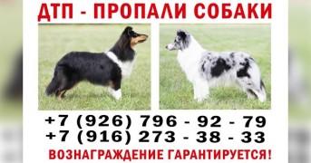 c83560a7f44bd0fa809264bc77b1fe09