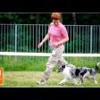 В районе 77-го км Ярославского шоссе ищут собак, убежавших после ДТП