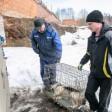Об отлове безнадзорных животных в Сергиево-Посадском округе