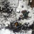 Убившие соседа предстанут перед судом