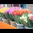 8 Марта – цветочный день