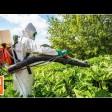 Обработка территорий от борщевика ведётся в Сергиево-Посадском округе