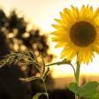Приём заявок на получение грантов на поддержку и развитие семейных ферм в Подмосковье начинается 1 июня