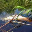 Реку, где начала гибнуть рыба и появился дурной запах, проверяют под Талдомом