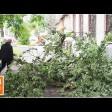 Оперативные службы убирают поваленные ураганом деревья в Сергиевом Посаде