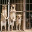 «Неизвестность всё ещё пугает»: как изменилась жизнь приютов для собак во время пандемии