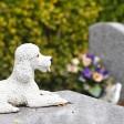 Как правильно осуществлять захоронение домашних животных?