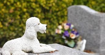 Asnieres animal cemetery, Asnieres, Hauts de Seine, France, Europe