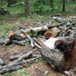 Леса в Абрамцево приводят в порядок