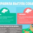Выгул собак на детских площадках запрещен: обращение жителей улицы Владимирская