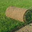 Проблемы выбора рулонного газона