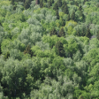 5 человек заблудились в Сергиево-Посадских лесах за первые 10 дней августа
