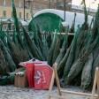 1 декабря в Подмосковье открывается сезон ёлочных базаров