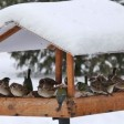 Помощь зимующим птицам