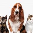 Как выбрать лучшего ветеринара в Сергиевом Посаде?