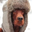 МЧС предупреждает об аномальных морозах в Подмосковье