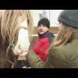 Конезавод с Сергиево-Посадском округе развивает конный спорт и туризм