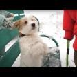 Дети и дрессированные собаки вместе отпраздновали Масленицу в Сергиевом Посаде