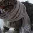 Со вторника в Московскую область вернутся морозы