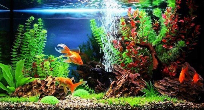 presnovodnyj-akvarium-i-ego-obitateli-1