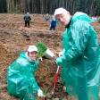 Деревообработка и экология