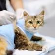 Кастрация или стерилизация животного: на чем остановить выбор?