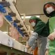 Компания «Серволюкс» запустила производство куриных полуфабрикатов под Тураково