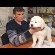 Главное - общение: зачем любителям собак вступать в кинологический клуб?