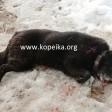 Убил чужую собаку на своём участке. Кто виноват?