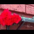 Возложение цветов к мемориальным доскам в Сергиево-Посадском городском округе