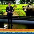 Дачники, похоже, в реальной опасности. Дикого медведя вновь заметили в Сергиевом Посаде