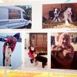 На выставке в Пушкино расскажут истории Сергиево-Посадских приютов для животных
