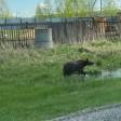 Медведя бояться — в лес не ходить?