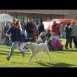 В рамках проекта «Гран-При Золотого Кольца» прошли международные выставки собак в Сергиевом Посаде