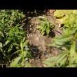 В Сергиево-Посадском округе продолжается борьба с незаконным сливом канализации