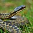 Тихая угроза. Как избежать сюрпризов при встрече со змеями и клещами