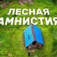 Лесная амнистия коснется Сергиево-Посадских земель до конца 2021 года