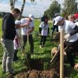 День округа стартовал акцией «Посади дерево»